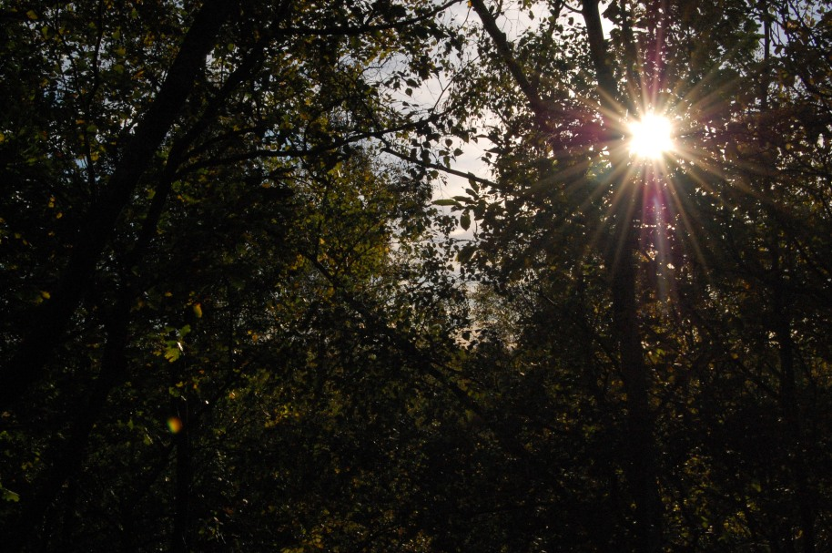 Sun through woodland